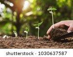 Hand Planting Seeding Growing...