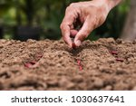 agriculture hand planting seeds ... | Shutterstock . vector #1030637641