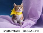 Stock photo kitten with a bow 1030653541