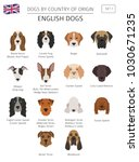 dogs by country of origin.... | Shutterstock .eps vector #1030671235