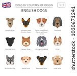 dogs by country of origin.... | Shutterstock .eps vector #1030671241