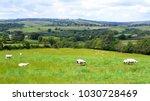 British Landscape In Summer ...