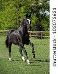 Small photo of Nice dutch warmblood stallion