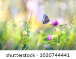 Stock photo wild flowers of clover and butterfly in a meadow in nature in the rays of sunlight in summer in the 1030744441
