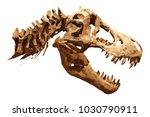 vector skeleton of... | Shutterstock .eps vector #1030790911