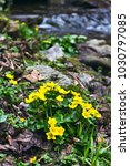 Small  Yellow Spring Flowers I...