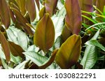 green and white leaf of... | Shutterstock . vector #1030822291