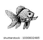 fish hand drown illustration... | Shutterstock .eps vector #1030832485