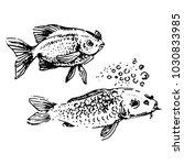 fish hand drown illustration... | Shutterstock .eps vector #1030833985