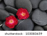 Two Red Rose On Beach Pebbles...