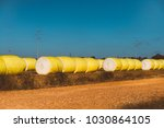 cotton round bales in yellow... | Shutterstock . vector #1030864105