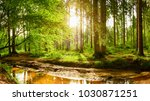 beautiful forest with bright... | Shutterstock . vector #1030871251