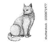 hand drawn illustration of cat. ... | Shutterstock .eps vector #1030871977