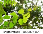 leaves with backlight from... | Shutterstock . vector #1030874164