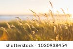 selective soft focus of beach... | Shutterstock . vector #1030938454