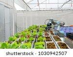 modern organic farmhouse adopts ... | Shutterstock . vector #1030942507