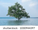 lonely tree on the beach ... | Shutterstock . vector #1030944397