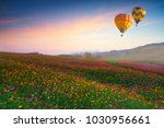 cosmos flower field  colorful... | Shutterstock . vector #1030956661