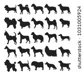 set of silhouette dogs breeds... | Shutterstock . vector #1031005924