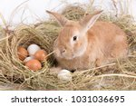 Small photo of a cute fluffy red rabbit lies next to the thatched nest, in which lie seven fresh different shiny eggs awaiting Easter