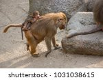 mother with baby on her back of ... | Shutterstock . vector #1031038615