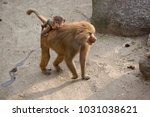 mother with baby on her back of ... | Shutterstock . vector #1031038621