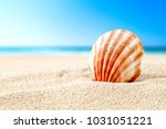 background of beach and shell... | Shutterstock . vector #1031051221