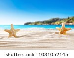 shell on sand and free space...   Shutterstock . vector #1031052145
