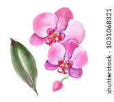 watercolor orchids on a white... | Shutterstock . vector #1031068321