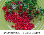 berries of red lingonberry in a ... | Shutterstock . vector #1031102395