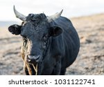 strong as bull  | Shutterstock . vector #1031122741