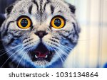 cute shocked cat | Shutterstock . vector #1031134864