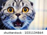 Cute Shocked Cat  Surprised...
