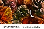 chinese lantern plant called... | Shutterstock . vector #1031183689