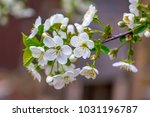Small photo of White Blossom in my Dream Garden