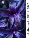 close up of dark purple...   Shutterstock . vector #1031211877