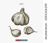 hand drawn garlic isolated.... | Shutterstock .eps vector #1031216194