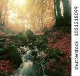 wonderful autumn sunrise... | Shutterstock . vector #1031218099