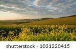 morning light illumintes fields ... | Shutterstock . vector #1031220415