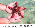 Red Knobbed Star Fish. Zanziba...