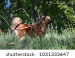 dog in the park | Shutterstock . vector #1031333647