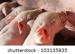 Momma Pig Feeding The Kids