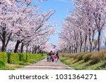 The Kids Enjoy Cherry Blossom...