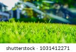 green lawn and background... | Shutterstock . vector #1031412271
