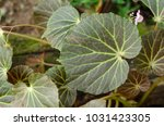 close up of green leave plant.... | Shutterstock . vector #1031423305