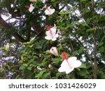 hawaiian flowers on kauai ...   Shutterstock . vector #1031426029