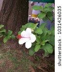 hawaiian flowers on kauai ...   Shutterstock . vector #1031426035