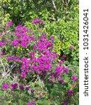 hawaiian flowers on kauai ...   Shutterstock . vector #1031426041