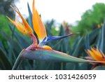 hawaiian flowers on kauai ...   Shutterstock . vector #1031426059
