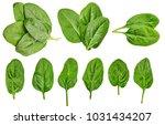 healthy diet. spinach. greenery.... | Shutterstock . vector #1031434207